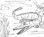 Free coloring and drawings Alligator in the river Coloring page