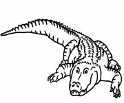 Free coloring and drawings crocodile simple to color Coloring page