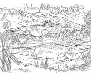 Free coloring and drawings Crocodiles in the wild Coloring page