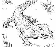 Free coloring and drawings Little Crocodile walking Coloring page