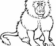 Free coloring and drawings Baboon online Coloring page