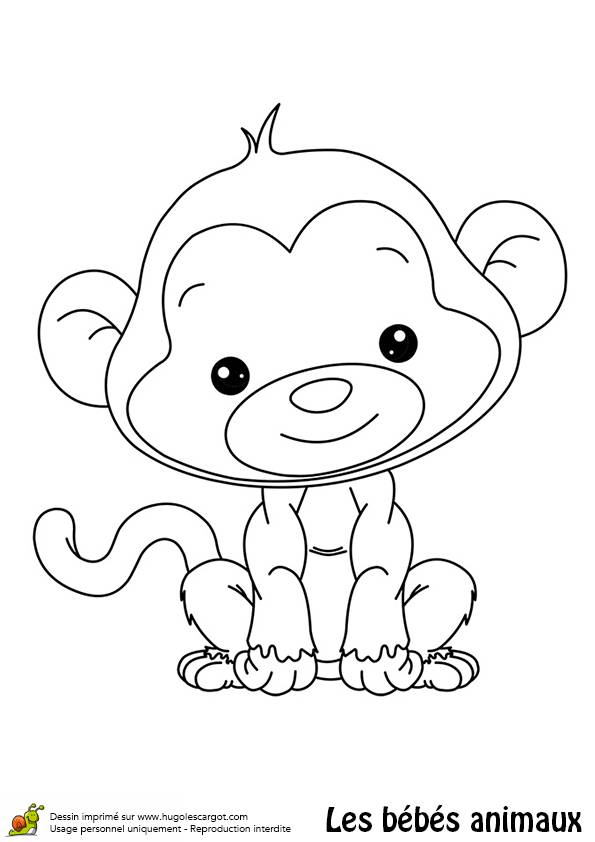 Free coloring and drawings Cute baboon Coloring page