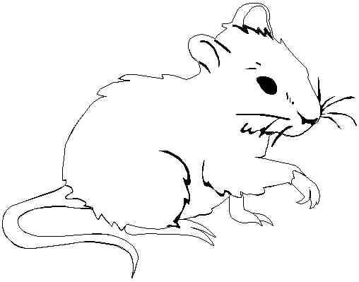 Free coloring and drawings A mouse Coloring page