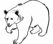Free coloring and drawings Bear Grizzly Coloring page