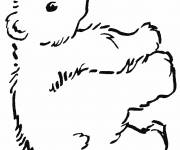 Coloring pages Bears simple