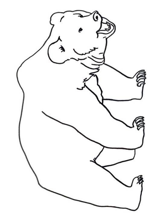 Free coloring and drawings Easy bear Coloring page