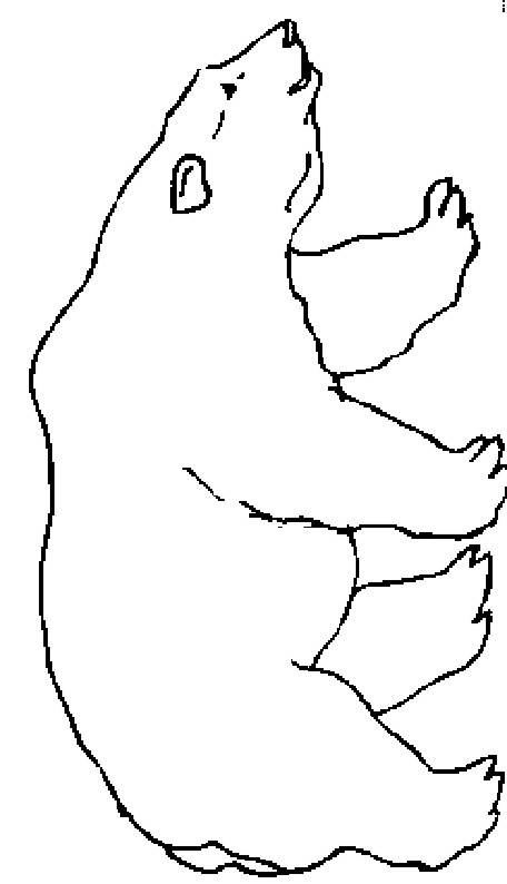Free coloring and drawings Polar bear Coloring page