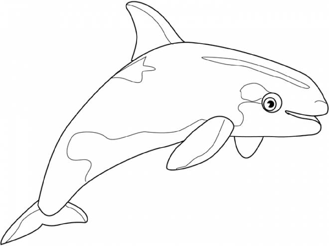 Free coloring and drawings Beluga color Coloring page