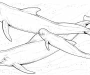Coloring pages Beluga with family