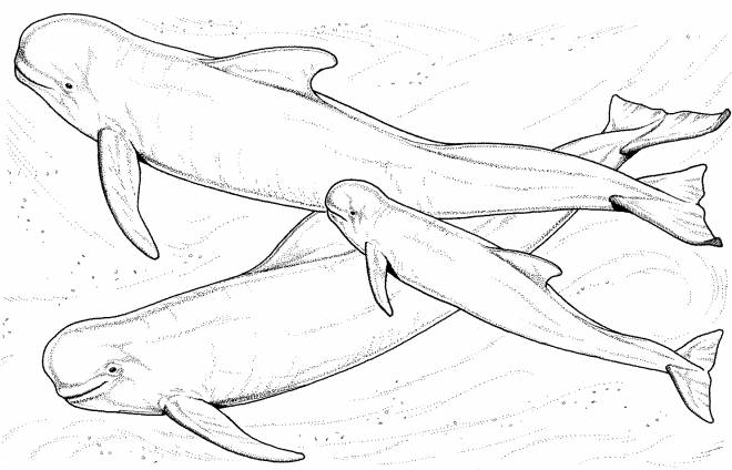 Free coloring and drawings Beluga with family Coloring page