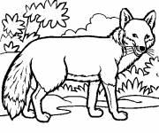 Free coloring and drawings Fox Coloring page