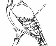 Free coloring and drawings A beautiful bird Coloring page