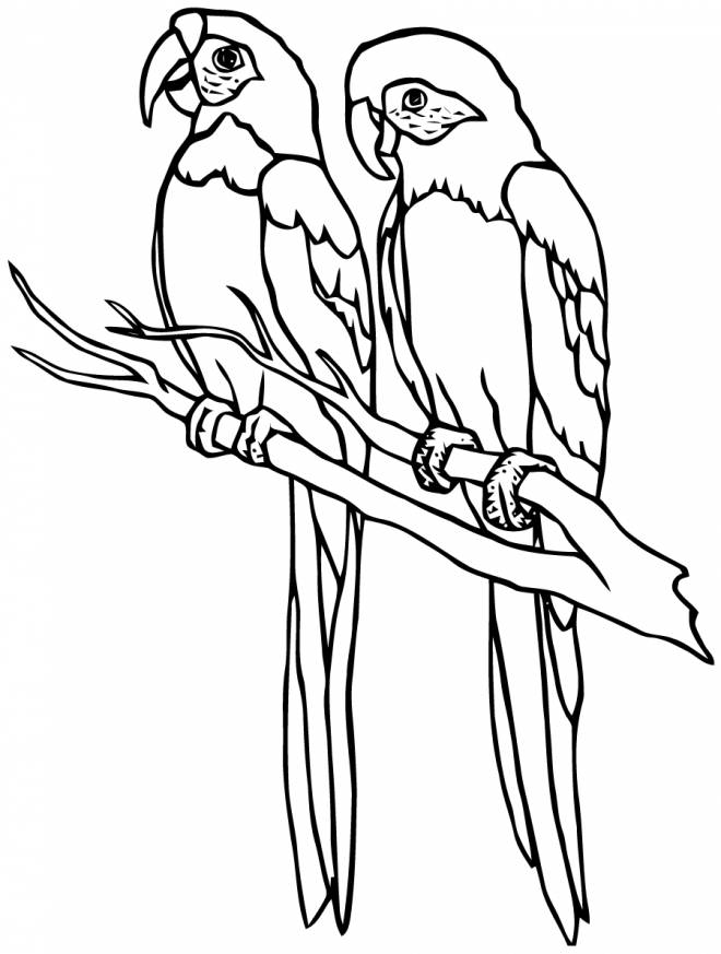 Free coloring and drawings A Couple of Parrots Coloring page