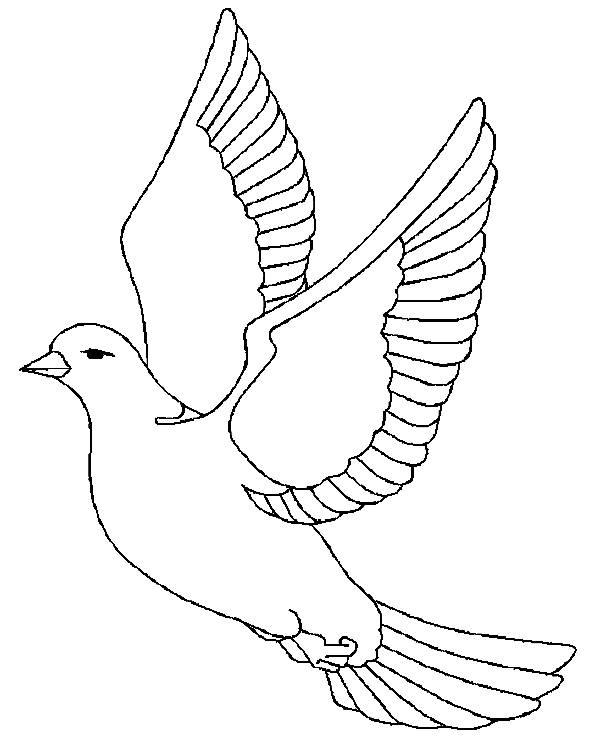 Free coloring and drawings A dove Coloring page