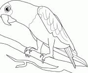 Free coloring and drawings A parrot Coloring page