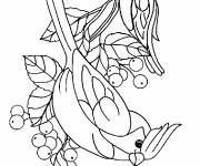 Coloring pages Adorable birds