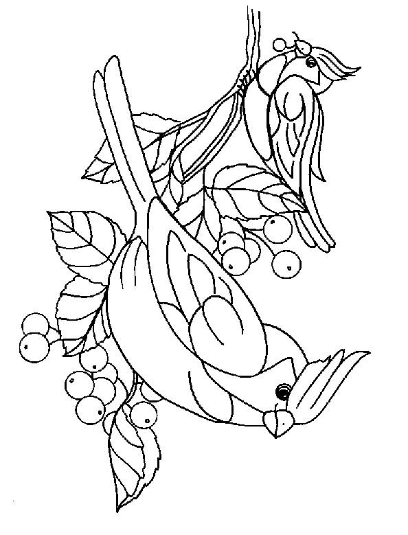 Free coloring and drawings Adorable birds Coloring page