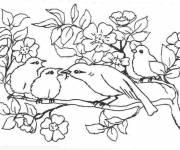 Free coloring and drawings Bird and cubs Coloring page