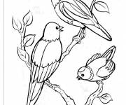Free coloring and drawings Birds on the tree Coloring page