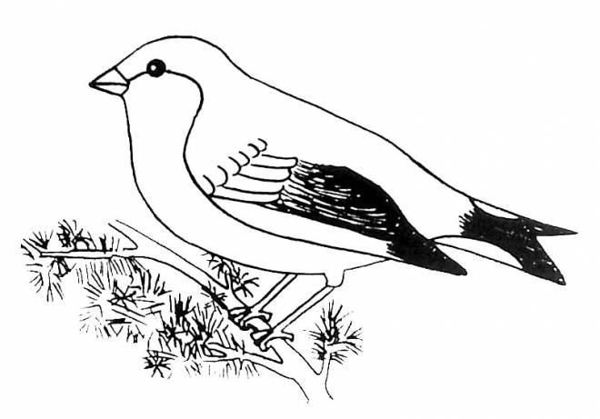 Free coloring and drawings Black and white bird Coloring page