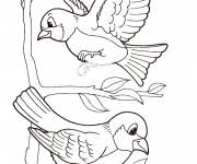 Free coloring and drawings Exotic birds Coloring page