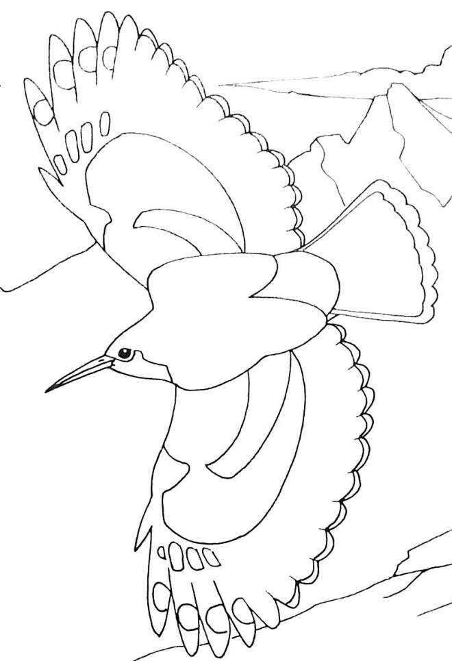 Free coloring and drawings Flying bird Coloring page