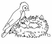 Coloring pages Mother Bird and baby