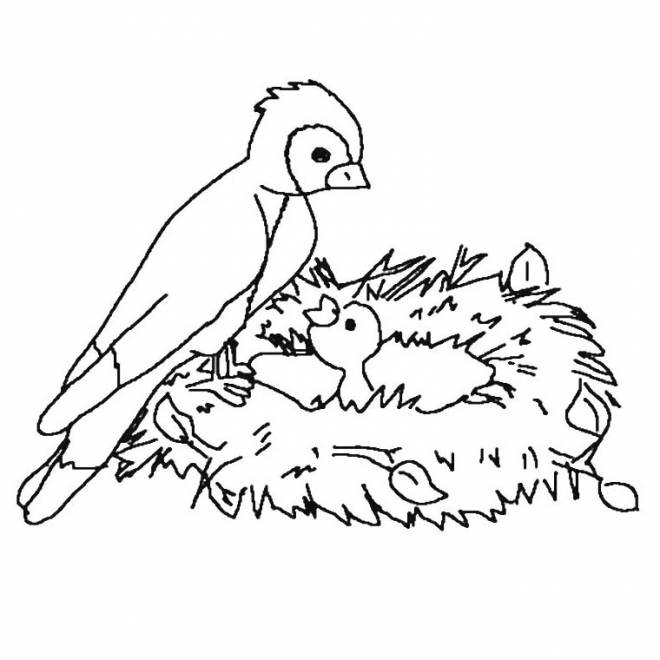 Free coloring and drawings Mother Bird and baby Coloring page