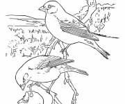 Free coloring and drawings Pencil bird Coloring page