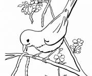Free coloring and drawings Singing bird drawing Coloring page