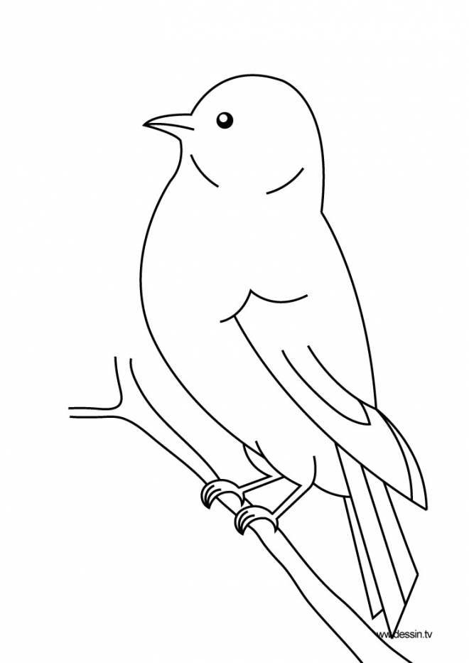 Free coloring and drawings Single bird Coloring page