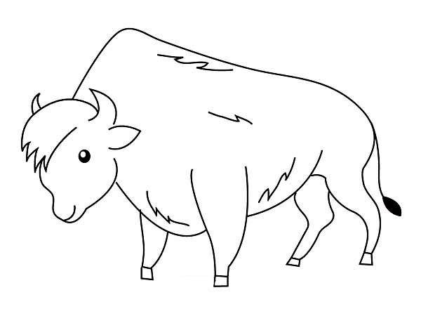 Free coloring and drawings A beautiful Bison Coloring page