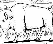 Free coloring and drawings A Bison walks in the forest Coloring page