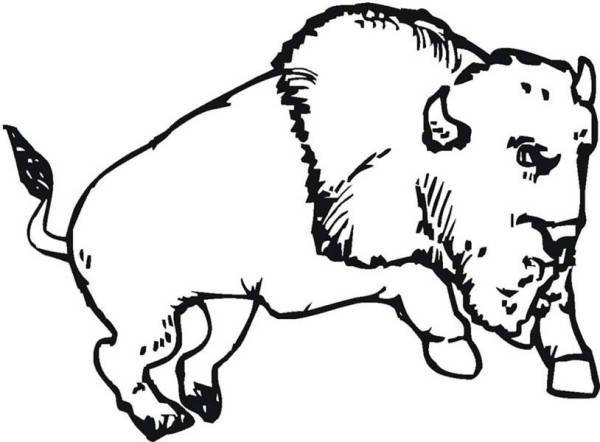 Free coloring and drawings A jumping Bison Coloring page