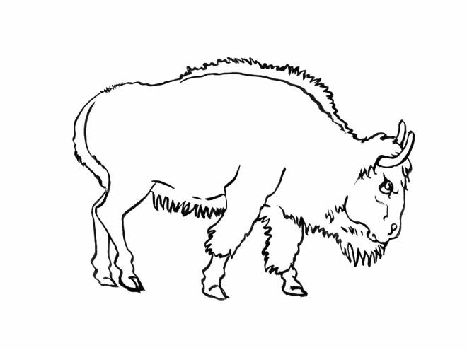 Free coloring and drawings Adult bison Coloring page