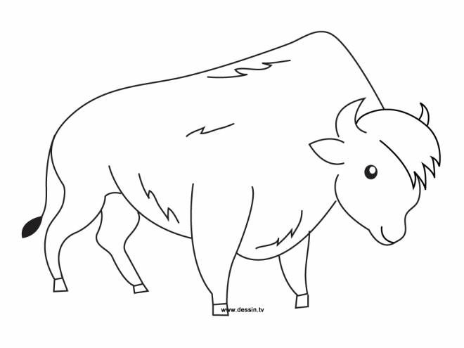 Free coloring and drawings Bison easy Coloring page