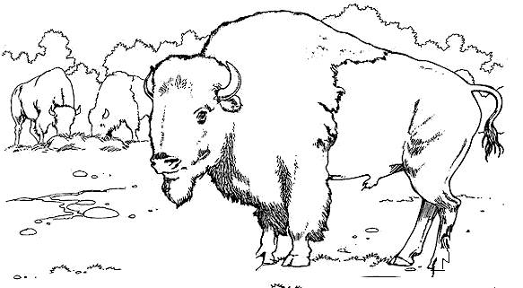 Free coloring and drawings Bison eating Coloring page