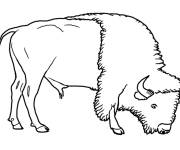 Coloring pages Bison eating in the field
