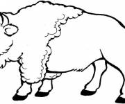 Coloring pages Bison in black and white