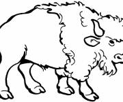 Free coloring and drawings Bison in color Coloring page