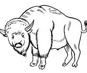 Coloring pages Bison in French