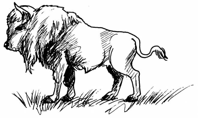 Free coloring and drawings Bison in pencil Coloring page