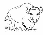 Free coloring and drawings Bison in the field Coloring page
