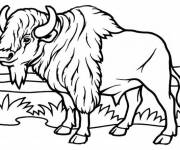 Coloring pages Bison in the plain