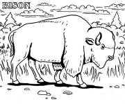 Free coloring and drawings Bison in the wild Coloring page