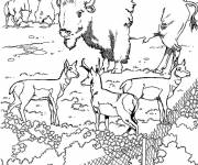 Free coloring and drawings Bison in the zoo Coloring page