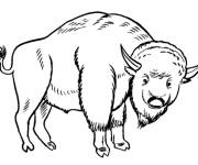 Free coloring and drawings Bison online Coloring page