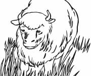 Coloring pages Bison outdoors