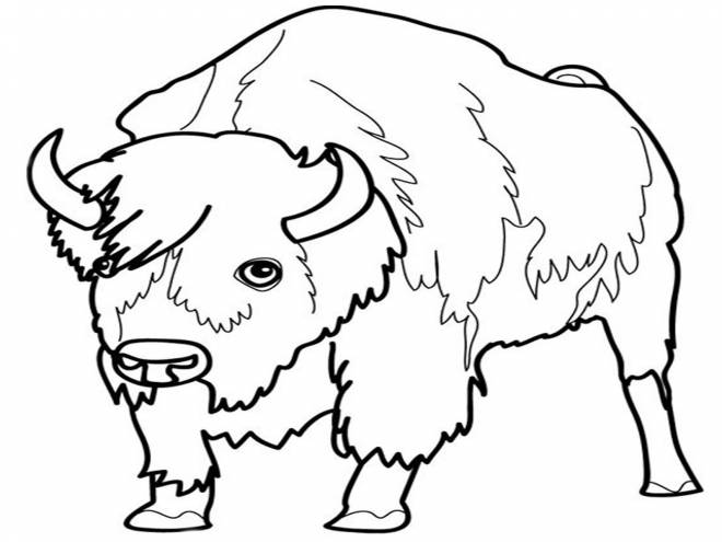 Free coloring and drawings Bison's gaze Coloring page