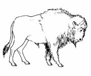 Free coloring and drawings Bison simple Coloring page